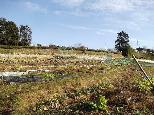 春を待つ野菜..._b0137932_15534447.jpg