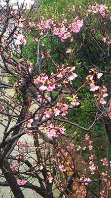 2月5日春にあいたい_b0158746_16564488.jpg