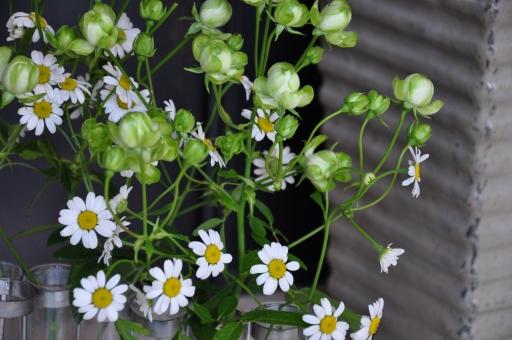 春爛漫_e0127399_1722144.jpg