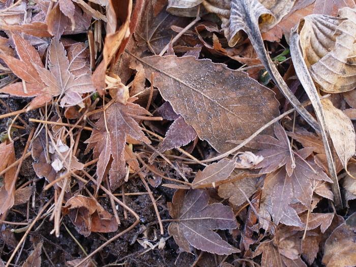 霜の朝_e0276411_11553130.jpg