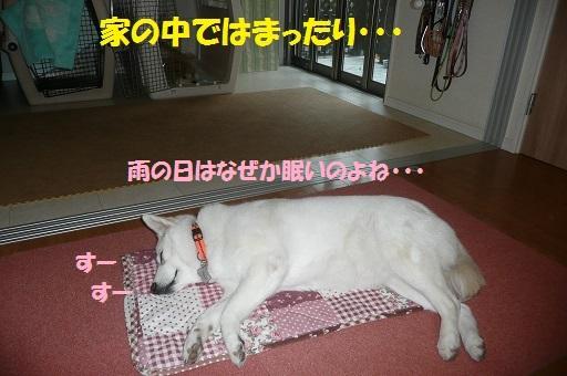 f0121712_811427.jpg