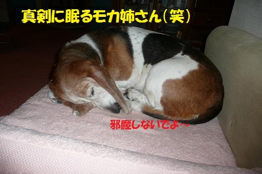 f0121712_811873.jpg