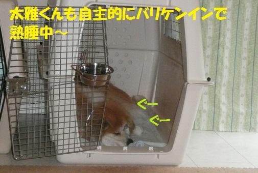 f0121712_812419.jpg