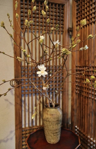 花だより 木蓮と、桜の続報_a0279848_17565384.jpg