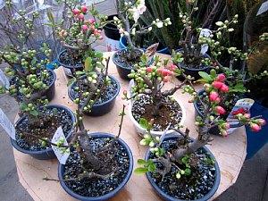 春を感じる花々_c0141652_8554524.jpg