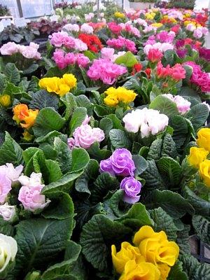 春を感じる花々_c0141652_903354.jpg