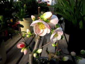 春を感じる花々_c0141652_913874.jpg