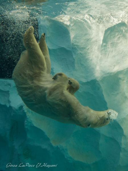 動物のいる風景 上野動物園 シロクマのザブーン_b0133053_0564646.jpg