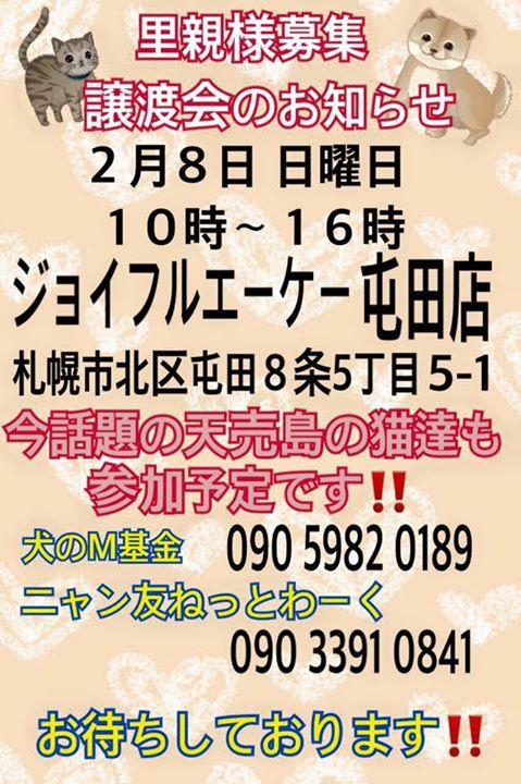 里親募集 譲渡会    2月8日_c0226202_11103798.jpg