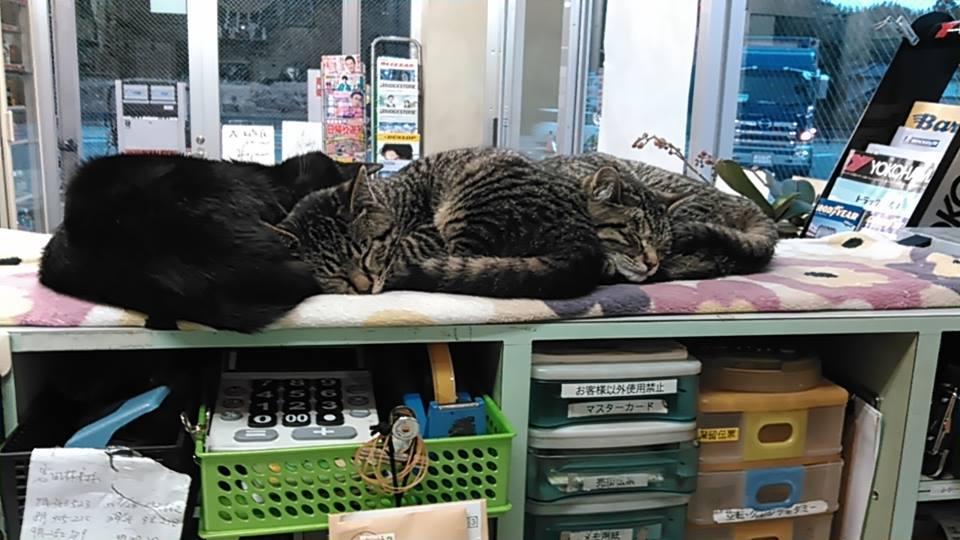 【猫】親子で・・_f0141609_222213.jpg