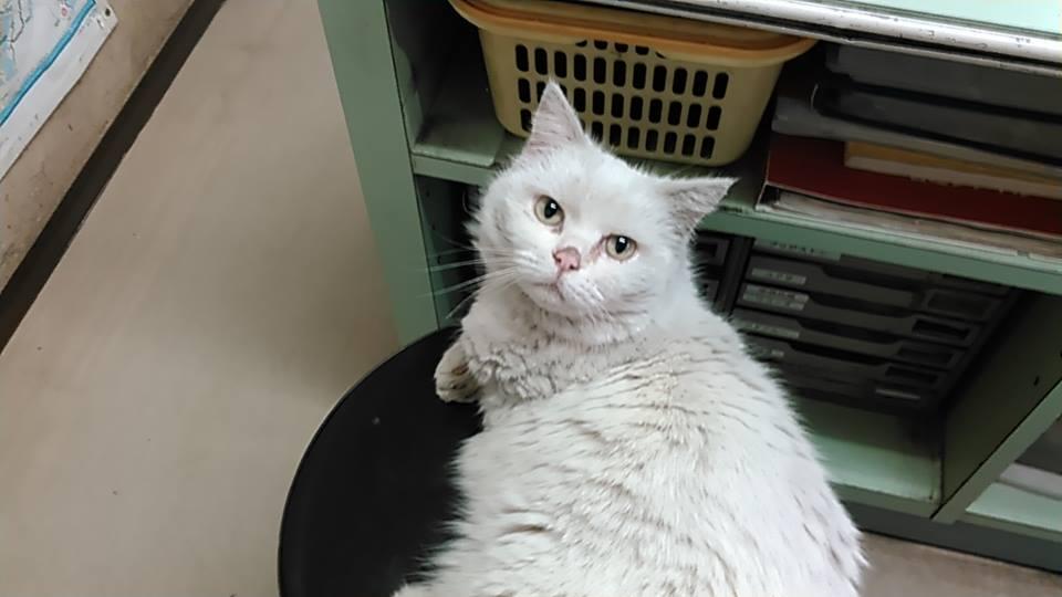 【猫】親子で・・_f0141609_2222370.jpg