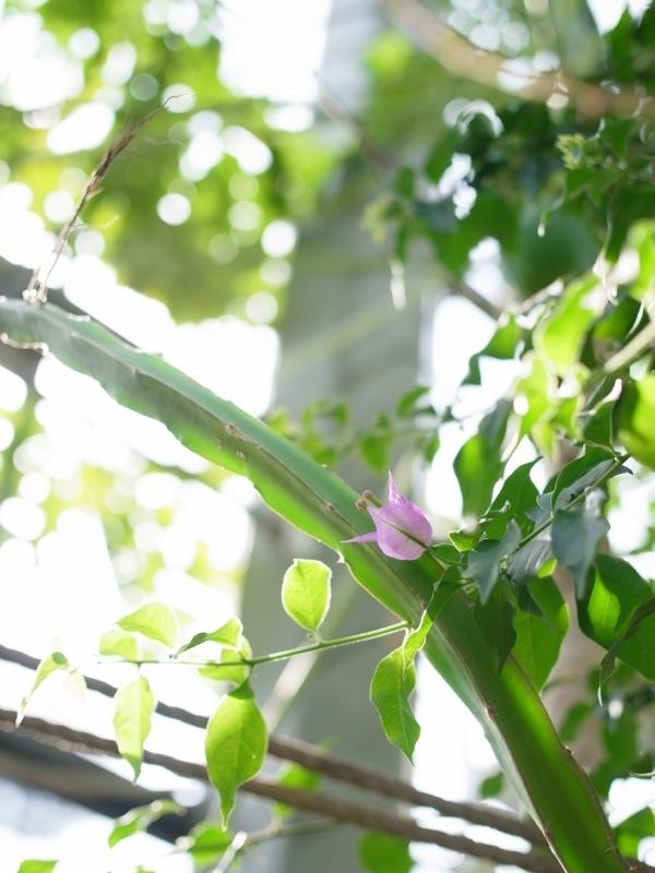 東京都薬用植物園の温室から_e0276411_22385064.jpg