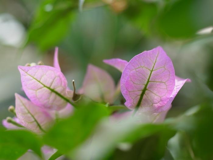 東京都薬用植物園の温室から_e0276411_22385737.jpg