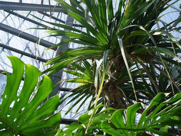 東京都薬用植物園の温室から_e0276411_2239312.jpg