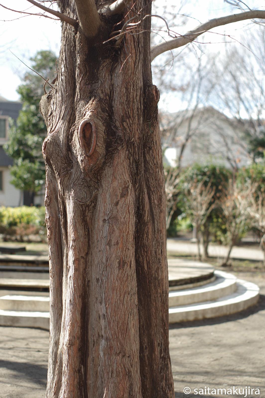 2015年2月6日  takumar 50mm f1.4(Ⅴ期型)_f0108797_19291991.jpg