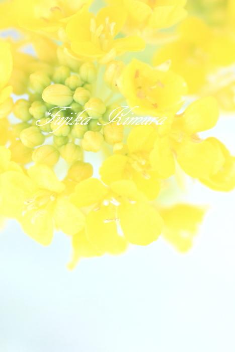 ■■ Spring color ■■_c0195662_22224012.jpg