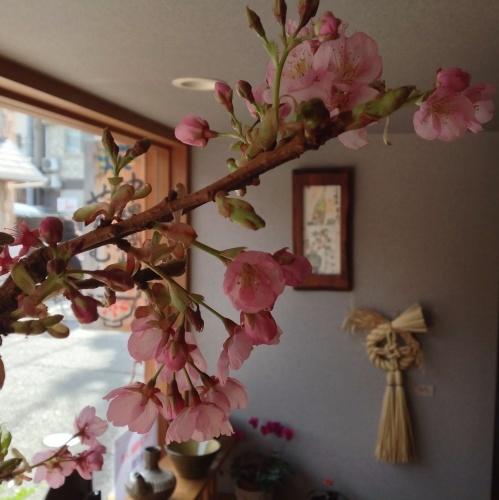 春の兆し 早咲き「伊東小室桜」_b0153663_14402271.jpg