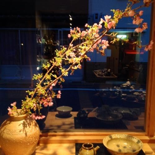 春の兆し 早咲き「伊東小室桜」_b0153663_14405306.jpg