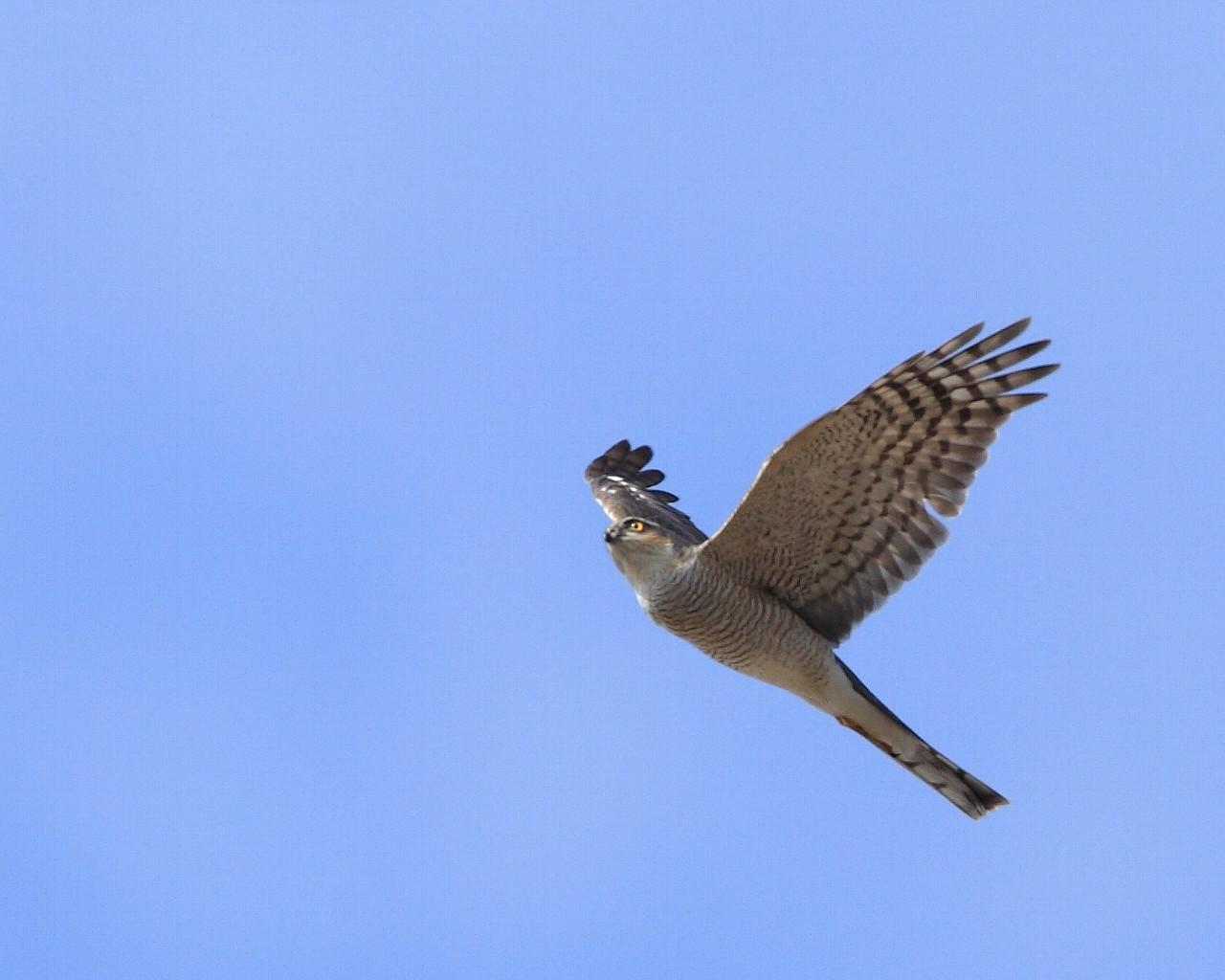 珍鳥を撮っていたら、、、_f0105570_10344324.jpg