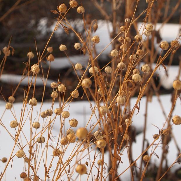 2月のお庭_a0292194_16422784.jpg