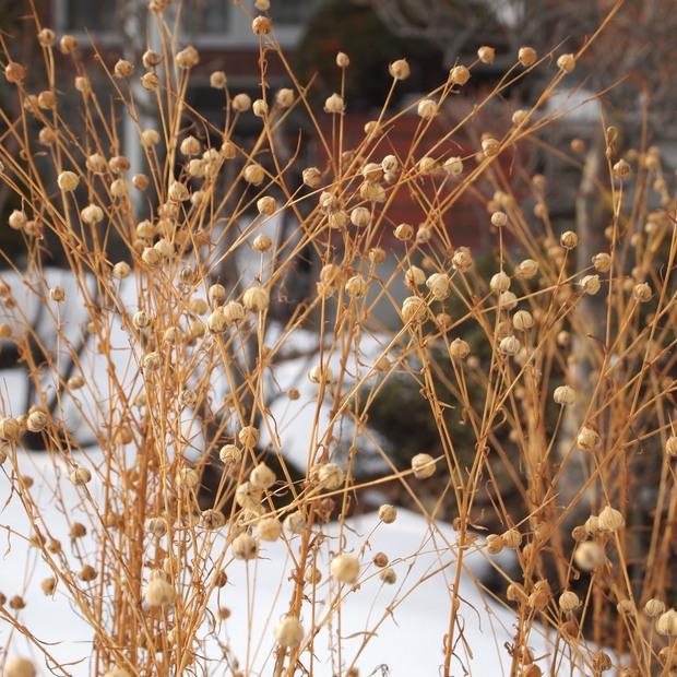 2月のお庭_a0292194_1642432.jpg