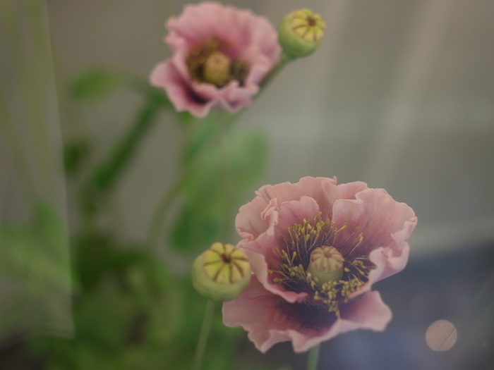 東京都薬用植物園 2_e0276411_10462622.jpg