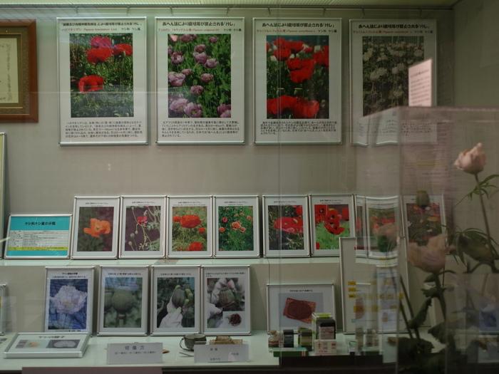 東京都薬用植物園 2_e0276411_10463194.jpg