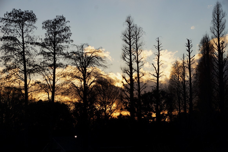 午後5時を回っても明るくなりました/水曜午後4時頃~5時にOPA GALLERY芽ぶきさん出展のグループ展「水仙」に行きます_f0006713_21413038.jpg