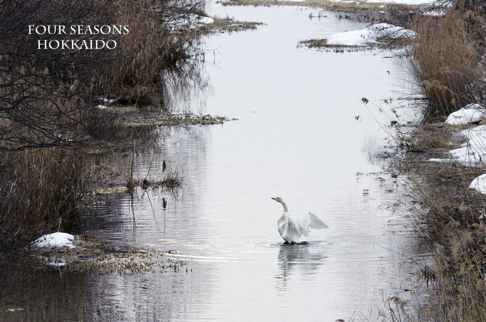 川辺も雪が少なめです。_f0152939_10384833.jpg