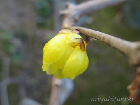 椿の花を食べたのだあれ?_b0255144_11383425.jpg