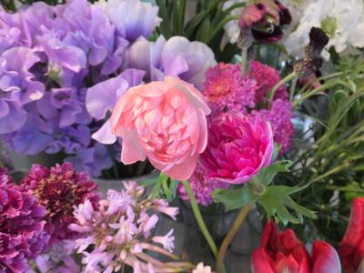 オークリーフ(キンポウゲ科の花)_f0049672_15492669.jpg