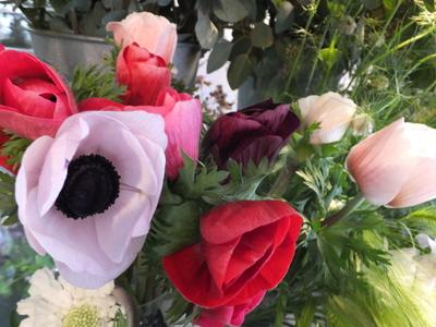 オークリーフ(キンポウゲ科の花)_f0049672_15494026.jpg