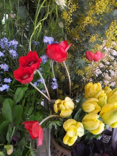 オークリーフ(キンポウゲ科の花)_f0049672_1549569.jpg