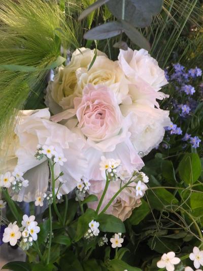 オークリーフ(キンポウゲ科の花)_f0049672_15503962.jpg