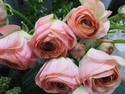 オークリーフ(キンポウゲ科の花)_f0049672_15504950.jpg