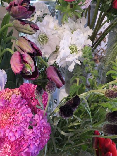 オークリーフ(キンポウゲ科の花)_f0049672_1551234.jpg