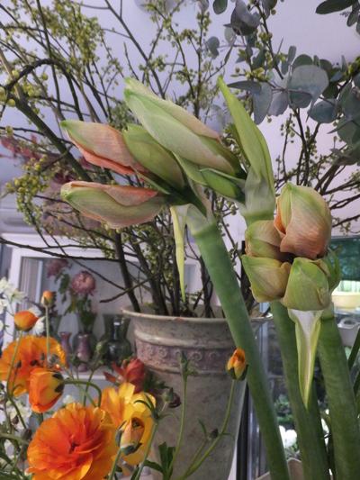 オークリーフ(キンポウゲ科の花)_f0049672_15513925.jpg
