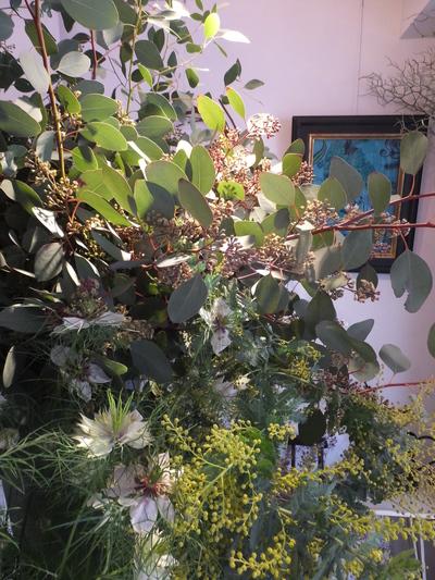 オークリーフ(キンポウゲ科の花)_f0049672_15514999.jpg