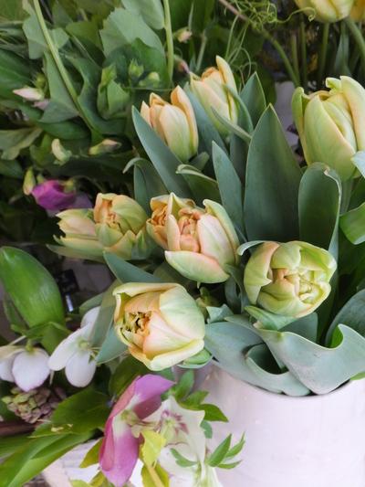 オークリーフ(キンポウゲ科の花)_f0049672_1551566.jpg