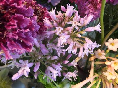 オークリーフ(キンポウゲ科の花)_f0049672_15522391.jpg
