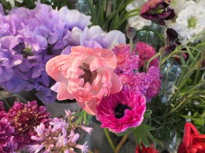 オークリーフ(キンポウゲ科の花)_f0049672_164188.jpg