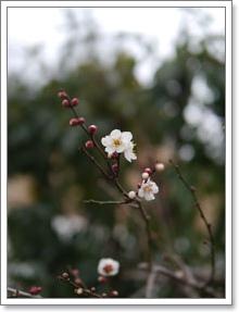 春寒_b0142989_17311034.jpg