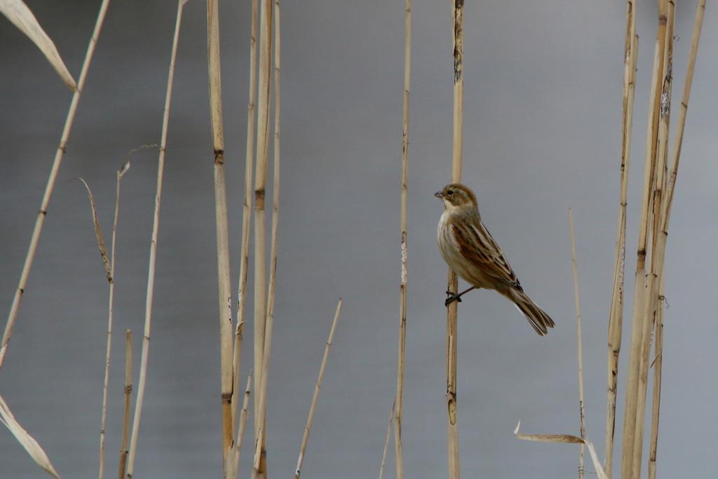 今日の鳥見(2015年2月10日)_f0235311_219438.jpg