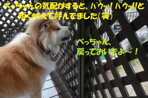 f0121712_8351673.jpg
