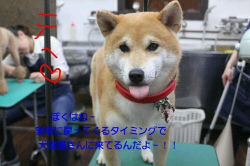 b0130018_1234493.jpg