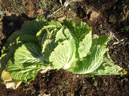 春を待つ野菜..._b0137932_14481722.jpg