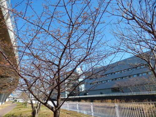 春到来?...河津桜が開花開始!_b0137932_18154384.jpg