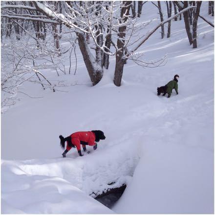 まろんと雪遊び_e0293553_22555496.jpg