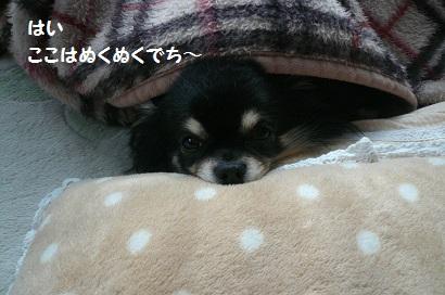 b0126658_16305087.jpg