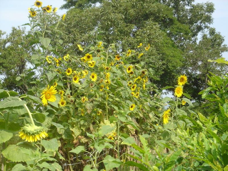 平成17年8月度うみべの森を育てる会運営委員会  _c0108460_23241452.jpg